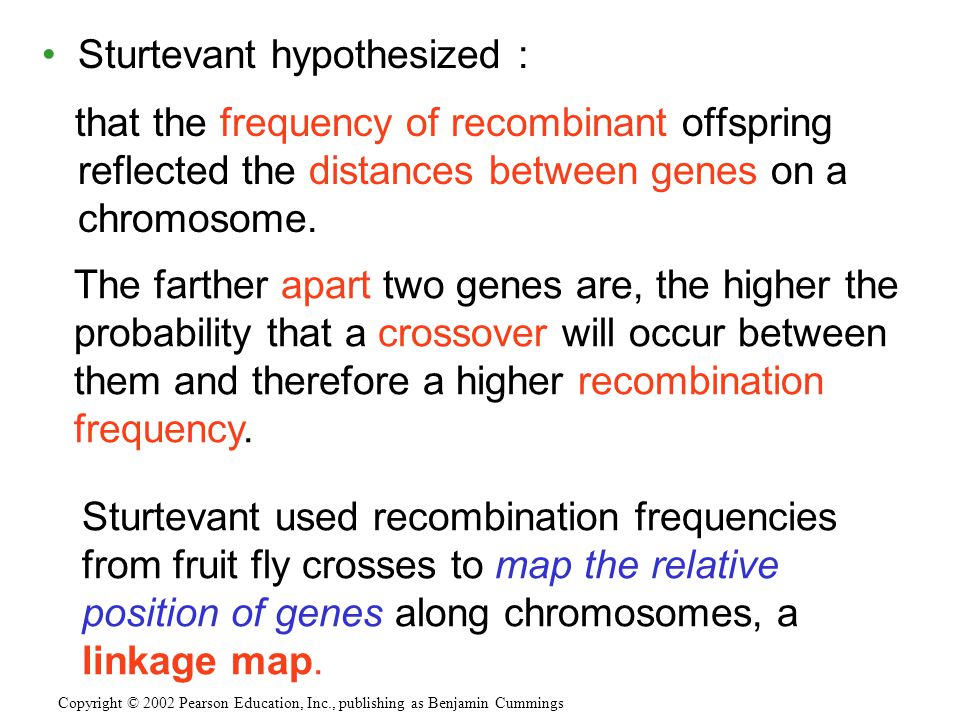 Sturtevant hypothesized : that the frequency of recombinant offspring reflected the distances between genes on a chromosome. Copyright © 2002 Pearson