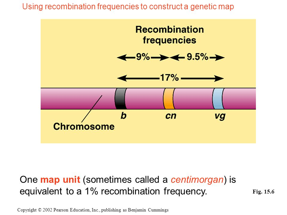 Copyright © 2002 Pearson Education, Inc., publishing as Benjamin Cummings Fig. 15.6 Using recombination frequencies to construct a genetic map One map