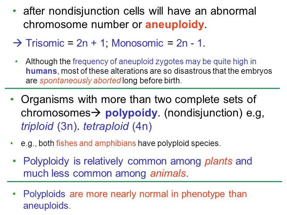 after nondisjunction cells will have an abnormal chromosome number or aneuploidy.  Trisomic = 2n + 1; Monosomic = 2n - 1. Although the frequency of a