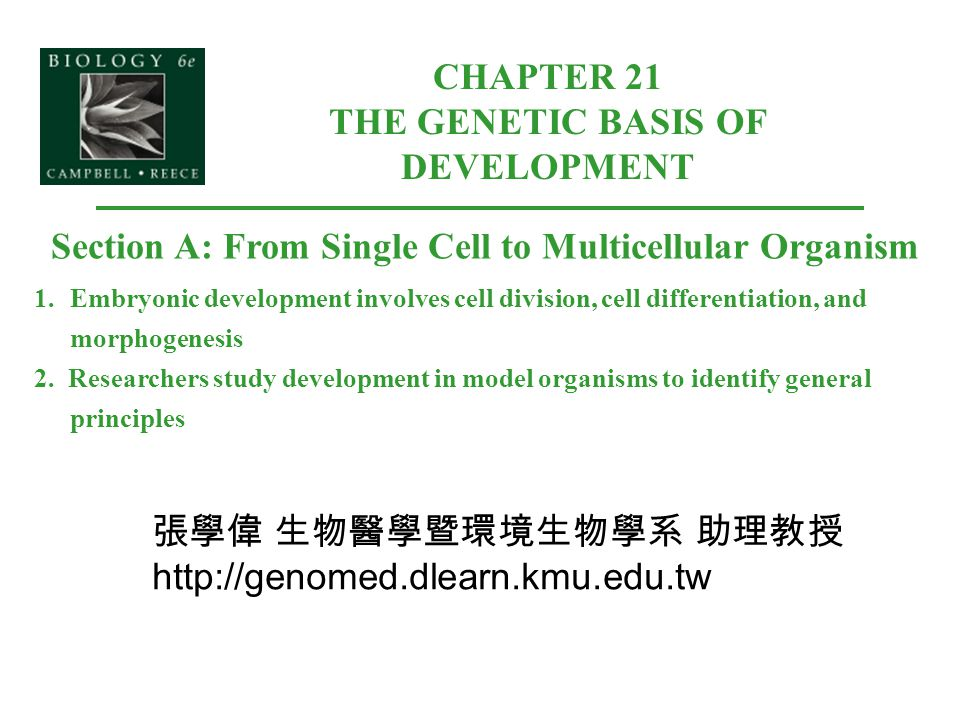 CHAPTER 21 THE GENETIC BASIS OF DEVELOPMENT Section A: From Single Cell to Multicellular Organism 1.Embryonic development involves cell division, cell