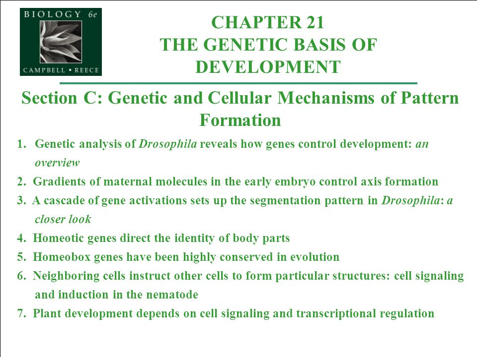 CHAPTER 21 THE GENETIC BASIS OF DEVELOPMENT Section C: Genetic and Cellular Mechanisms of Pattern Formation 1.Genetic analysis of Drosophila reveals h