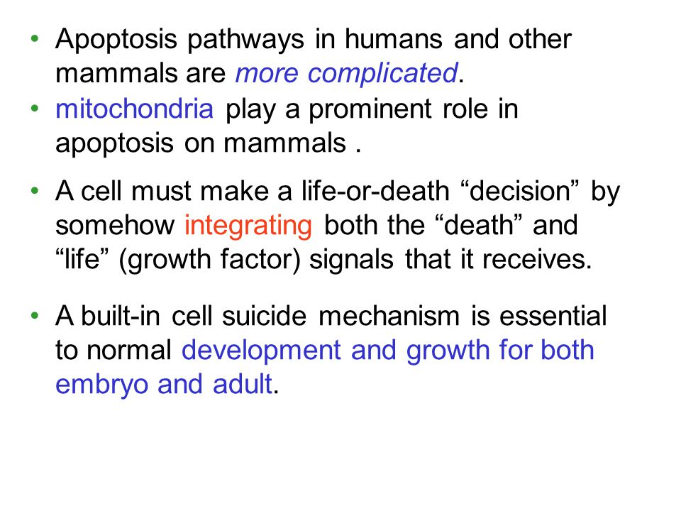 Apoptosis pathways in humans and other mammals are more complicated. A built-in cell suicide mechanism is essential to normal development and growth f