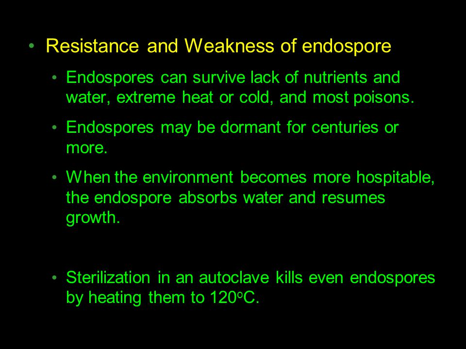 Resistance and Weakness of endospore Endospores can survive lack of nutrients and water, extreme heat or cold, and most poisons. Endospores may be dor