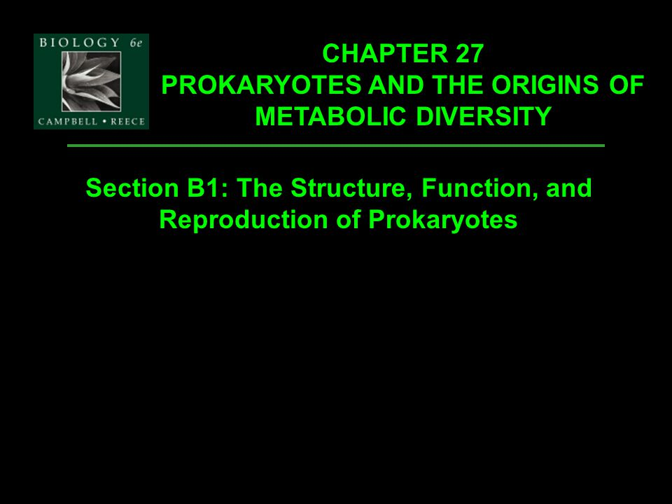 the general processes for DNA replication and translation are alike for eukaryotes and prokaryotes, but of some differ.
