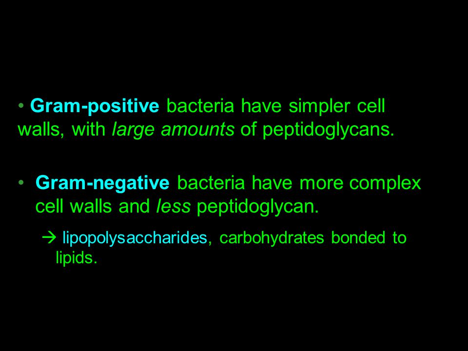 Gram-negative bacteria have more complex cell walls and less peptidoglycan.  lipopolysaccharides, carbohydrates bonded to lipids. Gram-positive bacte