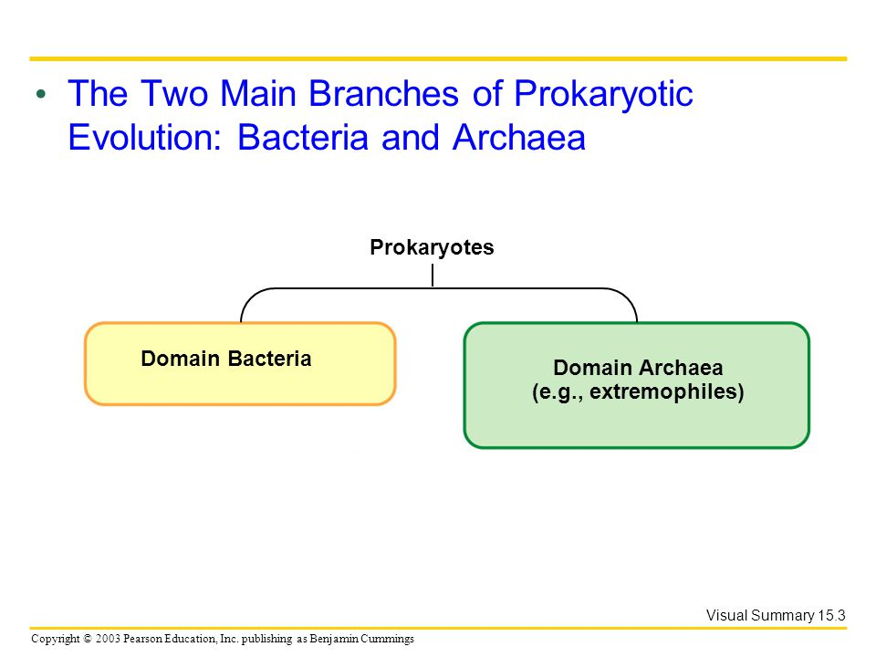 Copyright © 2003 Pearson Education, Inc. publishing as Benjamin Cummings The Two Main Branches of Prokaryotic Evolution: Bacteria and Archaea Visual S
