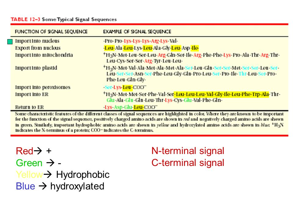 Red  + Green  - Yellow  Hydrophobic Blue  hydroxylated N-terminal signal C-terminal signal