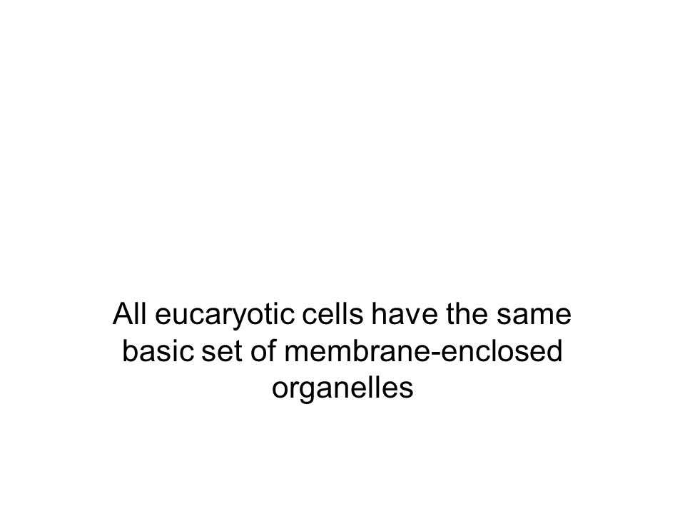 The major intracellular compartments of an animal cells.