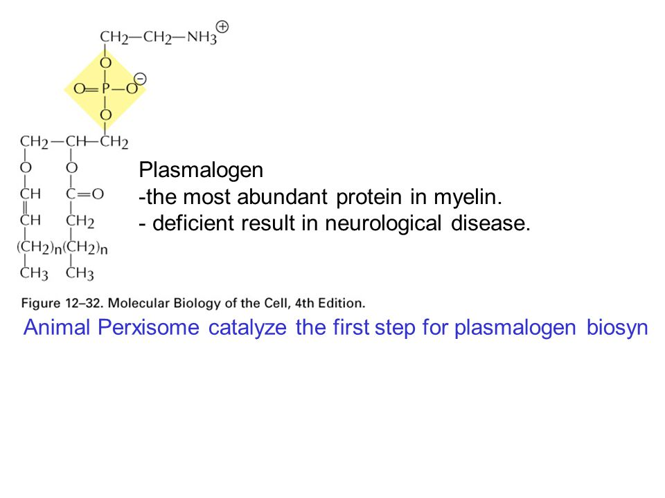 Plasmalogen -the most abundant protein in myelin. - deficient result in neurological disease. Animal Perxisome catalyze the first step for plasmalogen