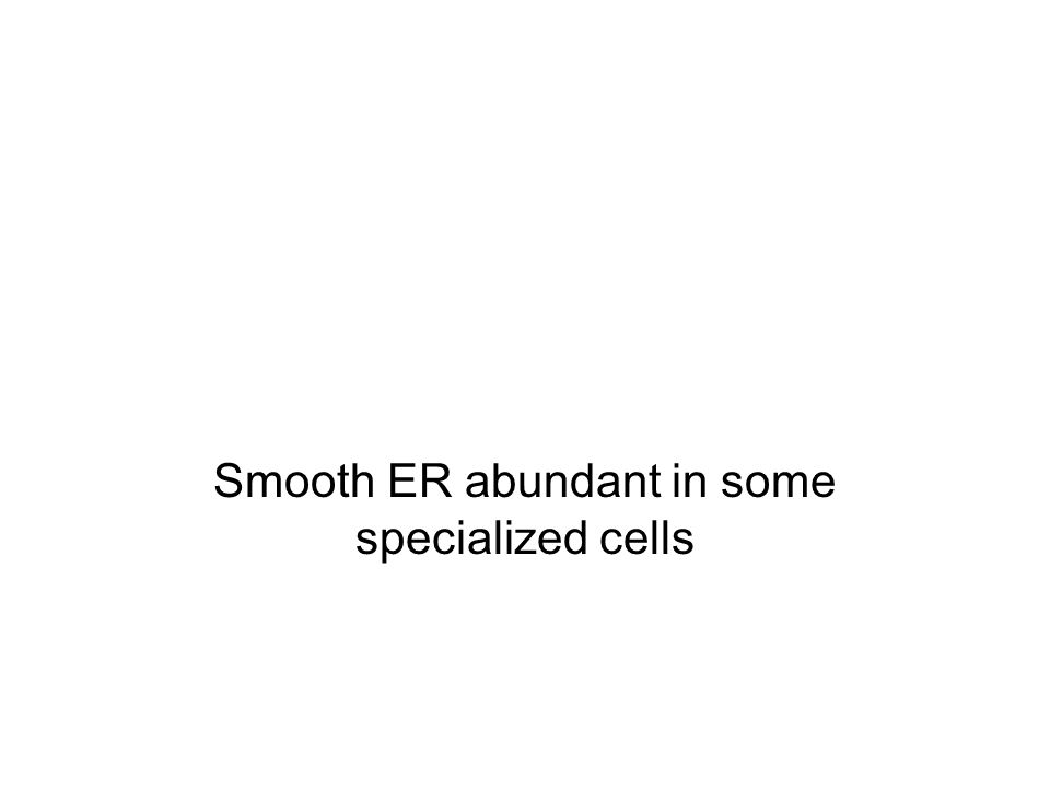Smooth ER abundant in some specialized cells