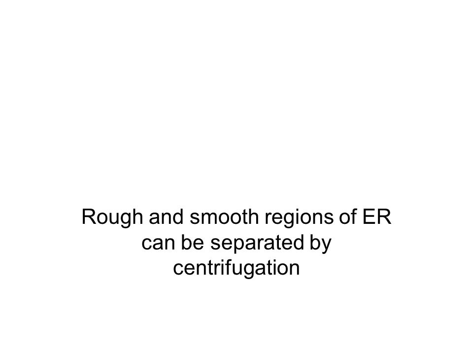 Rough and smooth regions of ER can be separated by centrifugation