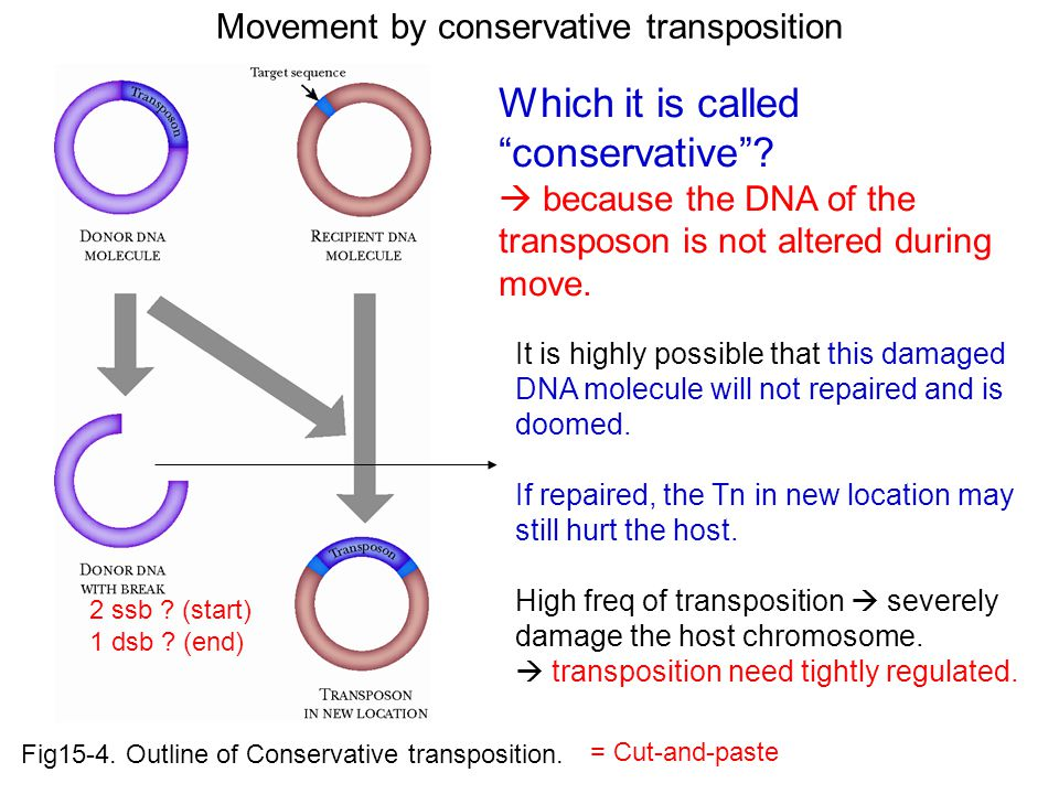 Fig15-4.Outline of Conservative transposition.