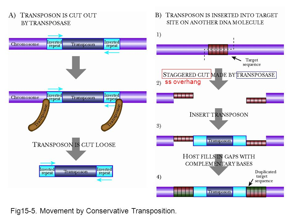 Fig15-5. Movement by Conservative Transposition. ss overhang