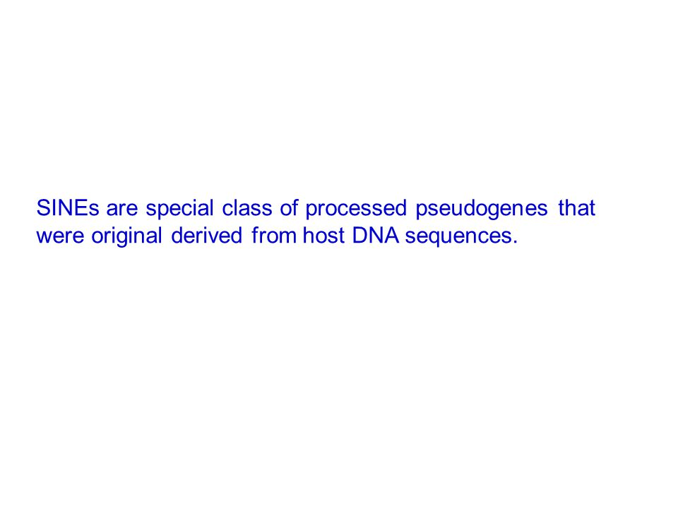 SINEs are special class of processed pseudogenes that were original derived from host DNA sequences.