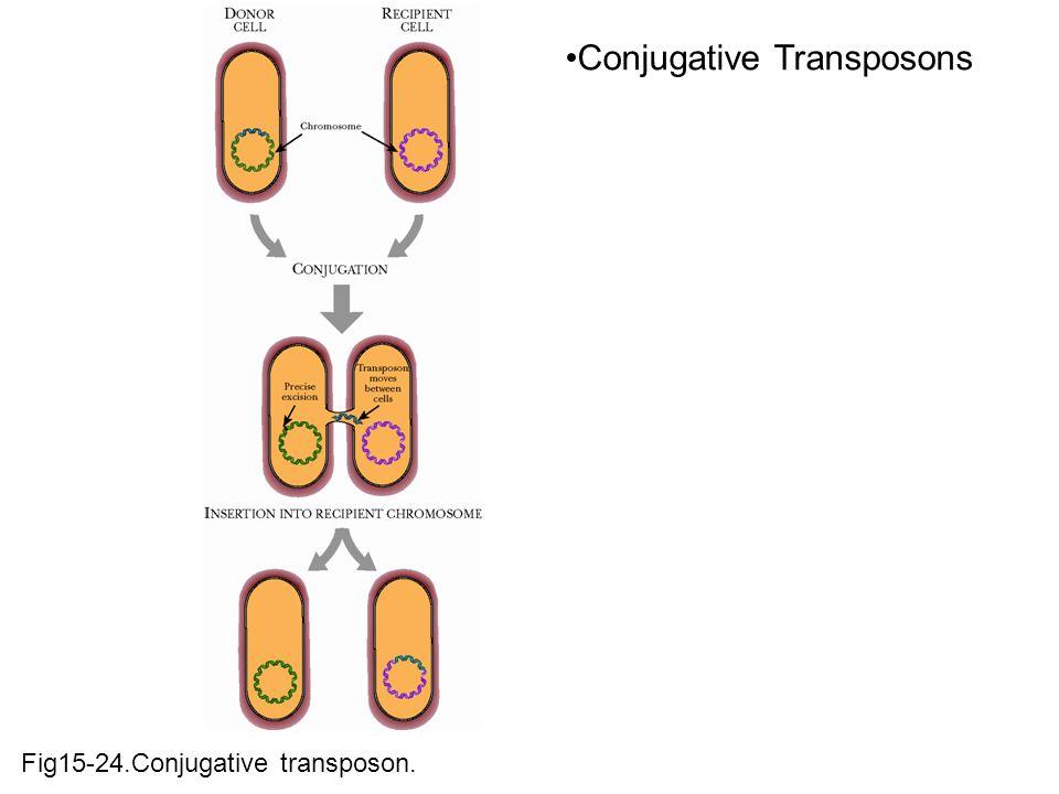 Fig15-24.Conjugative transposon. Conjugative Transposons