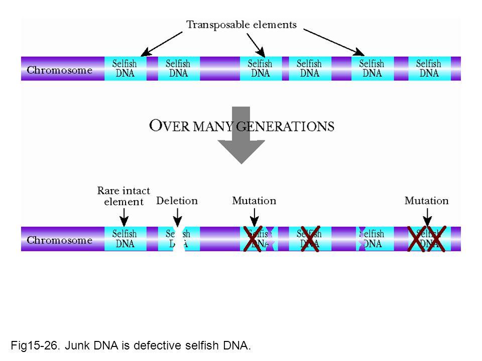Fig15-26. Junk DNA is defective selfish DNA.