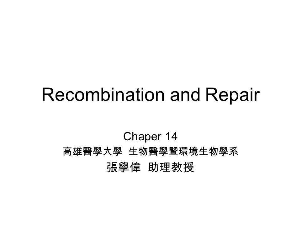 Recombination and Repair Chaper 14 高雄醫學大學 生物醫學暨環境生物學系 張學偉 助理教授