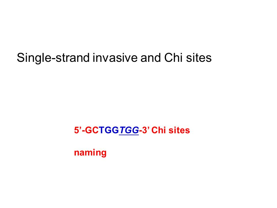 Single-strand invasive and Chi sites 5'-GCTGGTGG-3' Chi sites naming