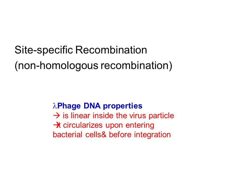 Site-specific Recombination (non-homologous recombination) Phage DNA properties  is linear inside the virus particle  it circularizes upon entering bacterial cells& before integration