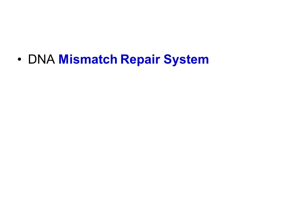 DNA Mismatch Repair System