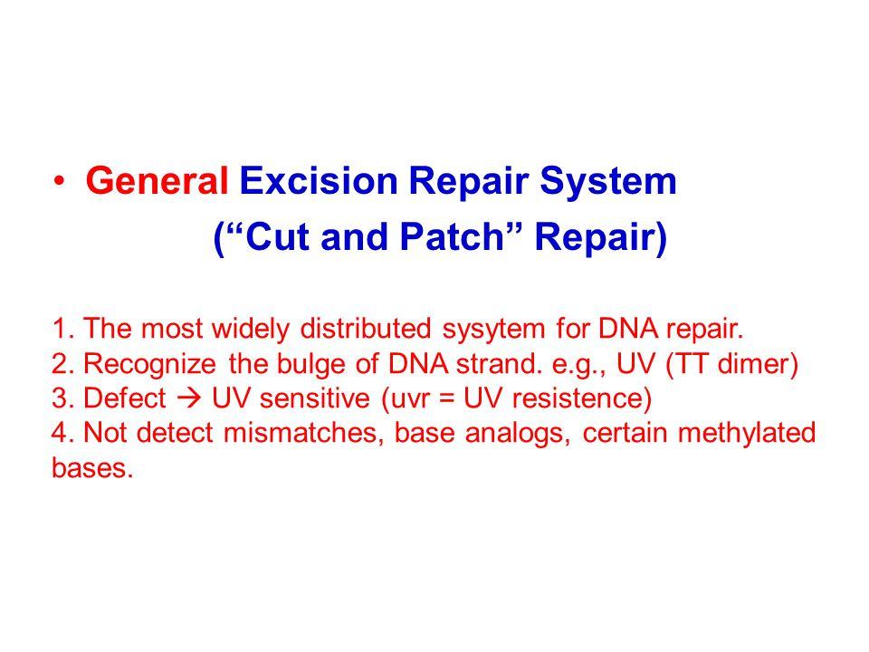 General Excision Repair System ( Cut and Patch Repair) 1.