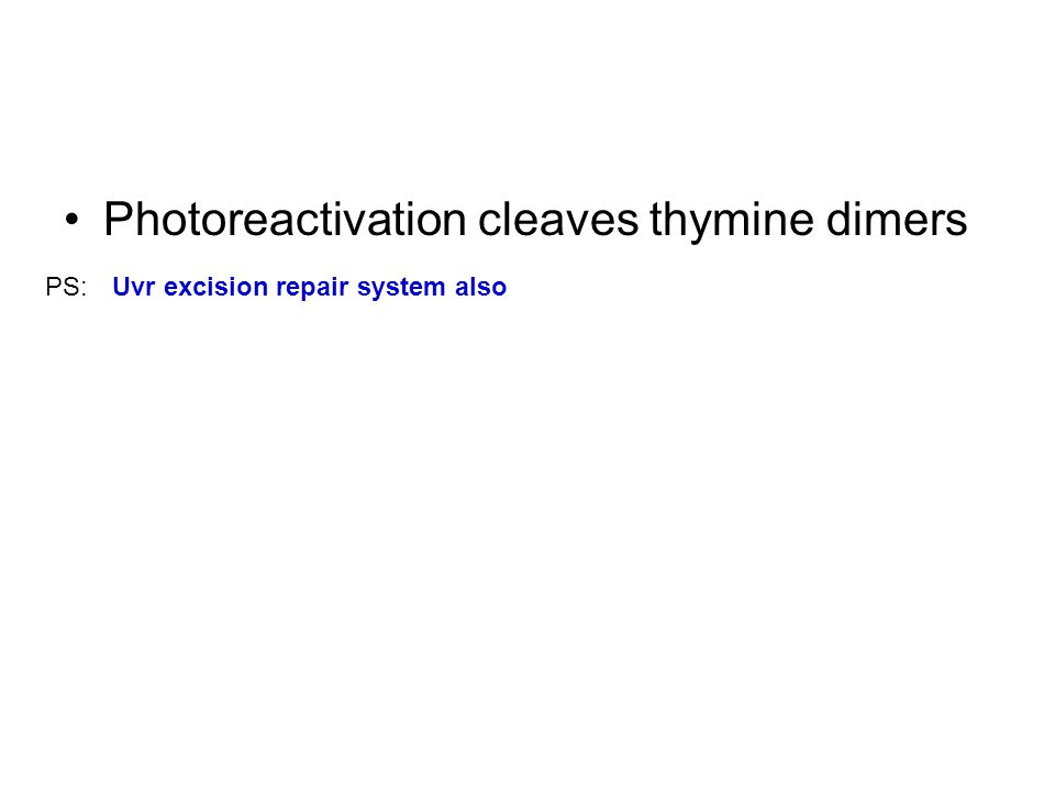 Photoreactivation cleaves thymine dimers Uvr excision repair system alsoPS: