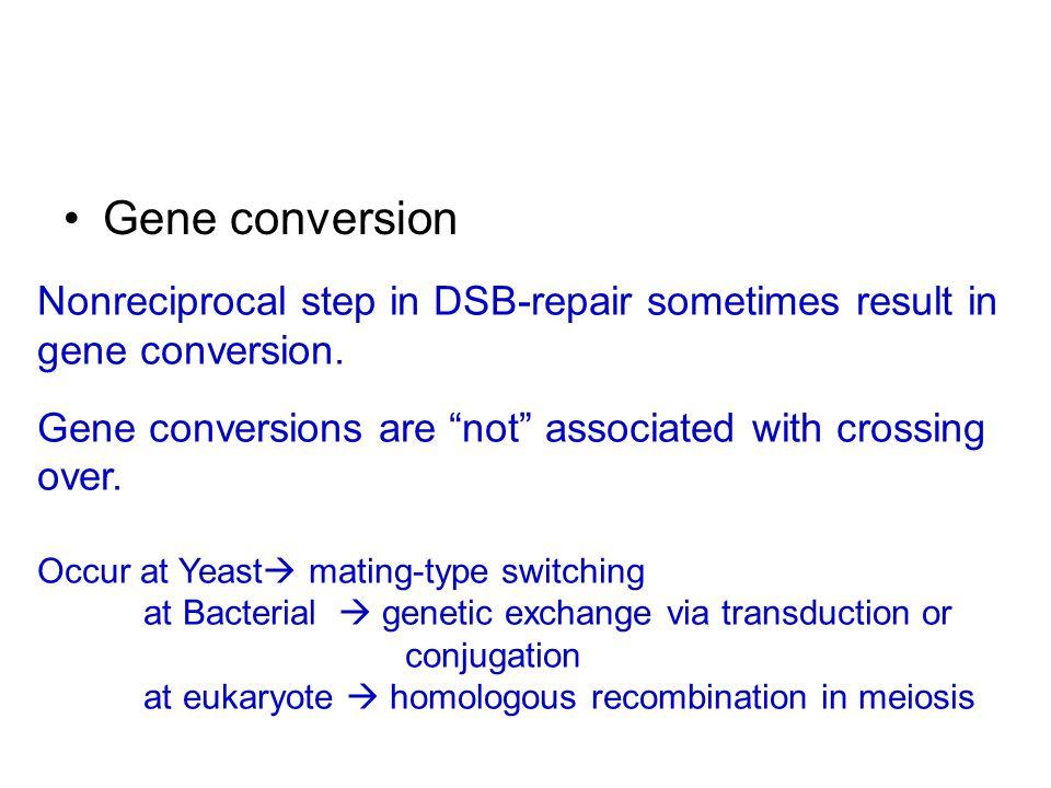 Gene conversion Nonreciprocal step in DSB-repair sometimes result in gene conversion.