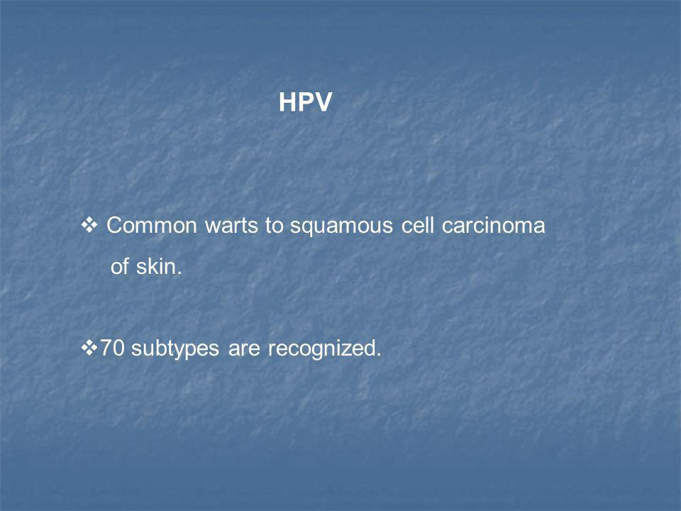 HPV  Common warts to squamous cell carcinoma of skin.  70 subtypes are recognized.