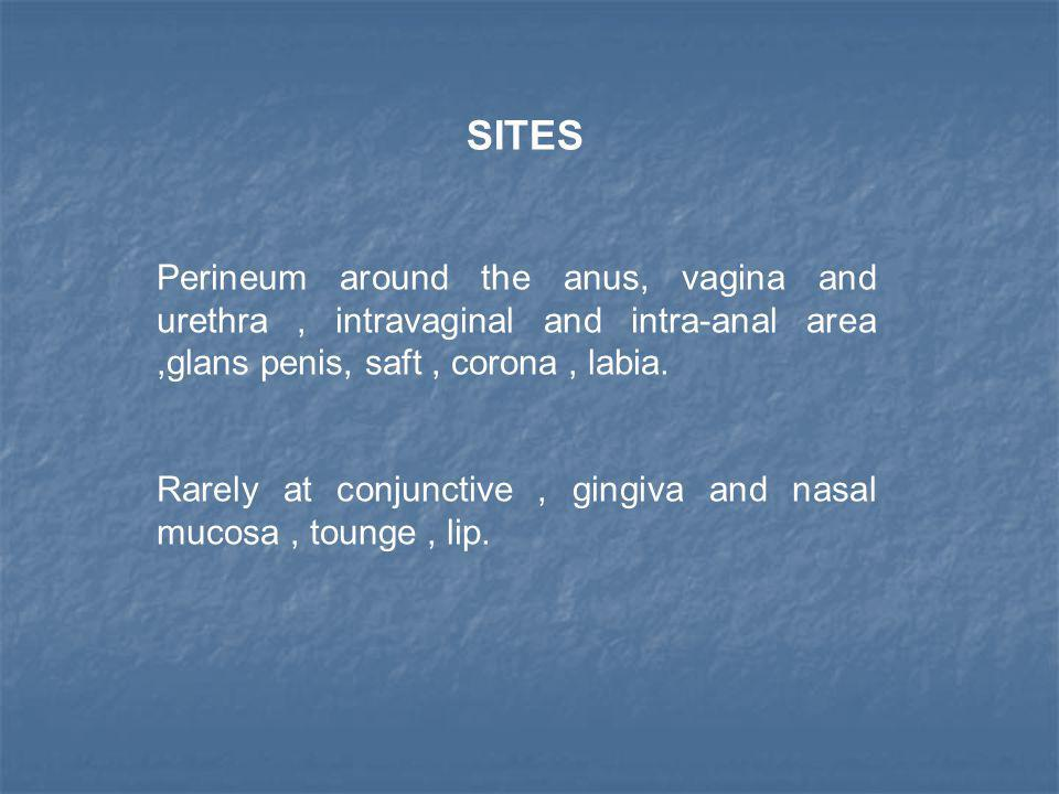 Perineum around the anus, vagina and urethra, intravaginal and intra-anal area,glans penis, saft, corona, labia. Rarely at conjunctive, gingiva and na