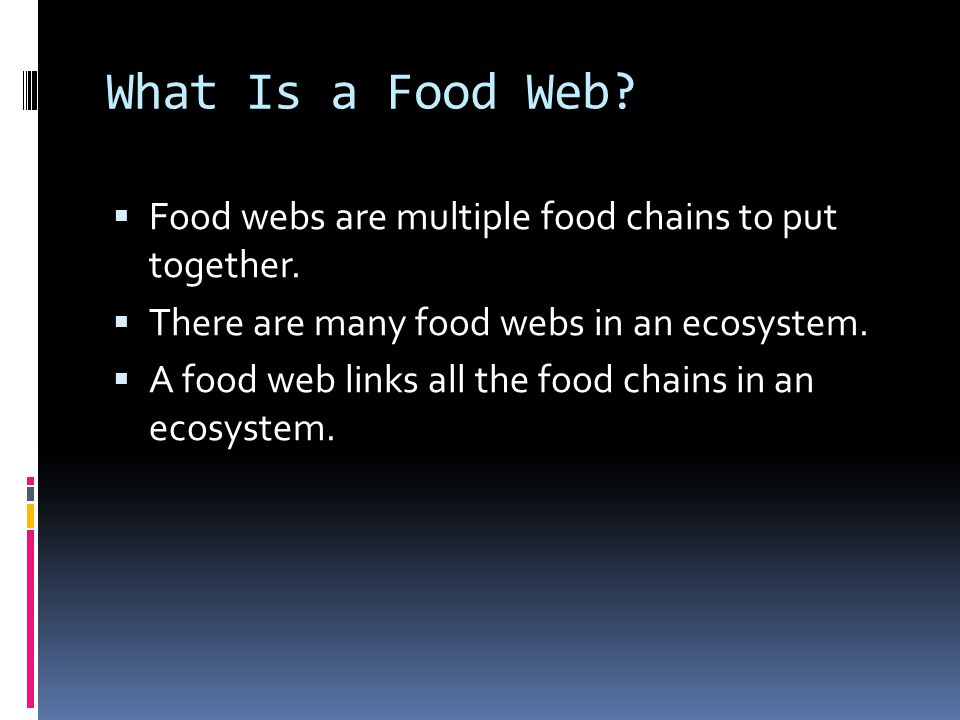 What Is a Food Web.  Food webs are multiple food chains to put together.
