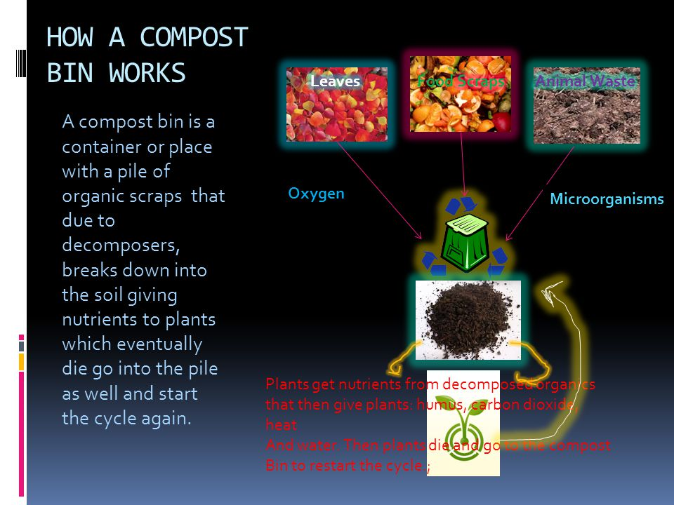 HOW A COMPOST BIN WORKS A compost bin is a container or place with a pile of organic scraps that due to decomposers, breaks down into the soil giving nutrients to plants which eventually die go into the pile as well and start the cycle again.