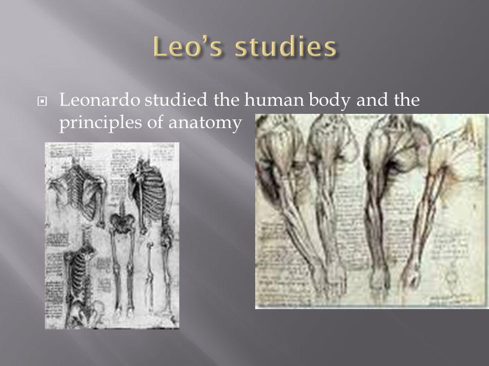  Leonardo studied the human body and the principles of anatomy