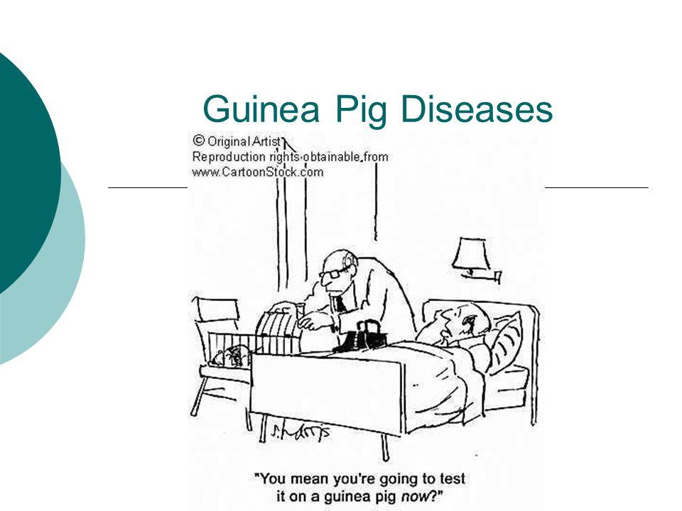 Guinea Pig Diseases