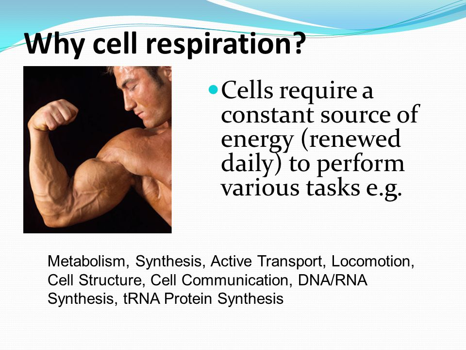 Why cell respiration.