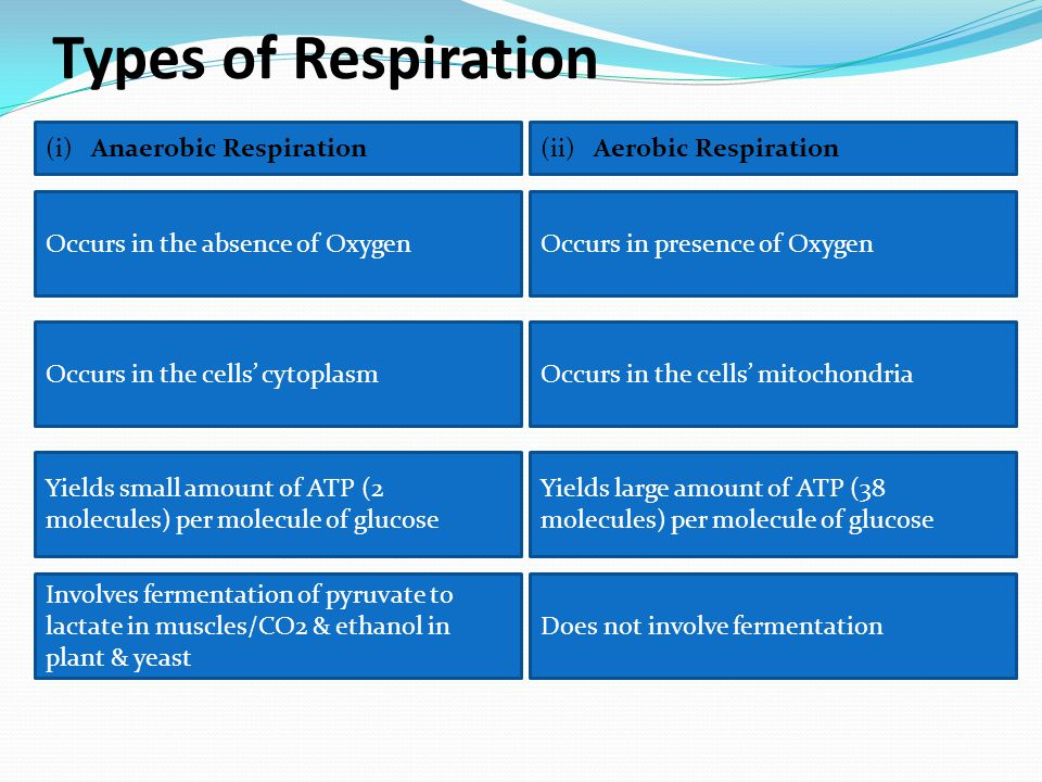 Types of Respiration Occurs in the absence of Oxygen (ii) Aerobic Respiration Occurs in presence of Oxygen Occurs in the cells' cytoplasmOccurs in the cells' mitochondria Yields small amount of ATP (2 molecules) per molecule of glucose Yields large amount of ATP (38 molecules) per molecule of glucose Does not involve fermentation Involves fermentation of pyruvate to lactate in muscles/CO2 & ethanol in plant & yeast (i) Anaerobic Respiration