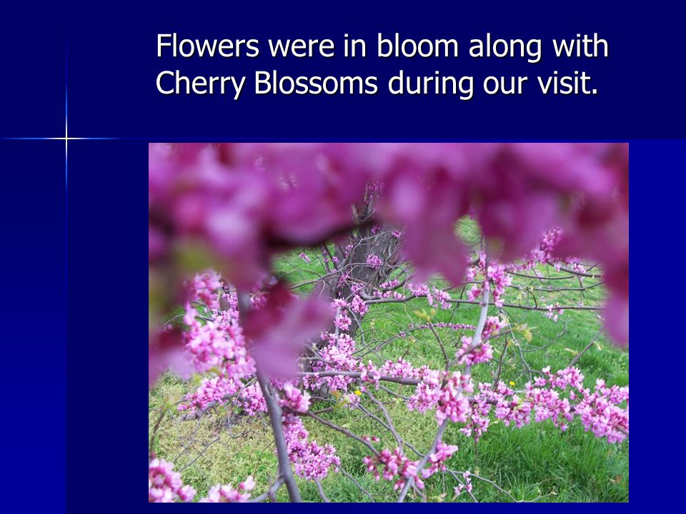 Flowers were in bloom along with Cherry Blossoms during our visit.