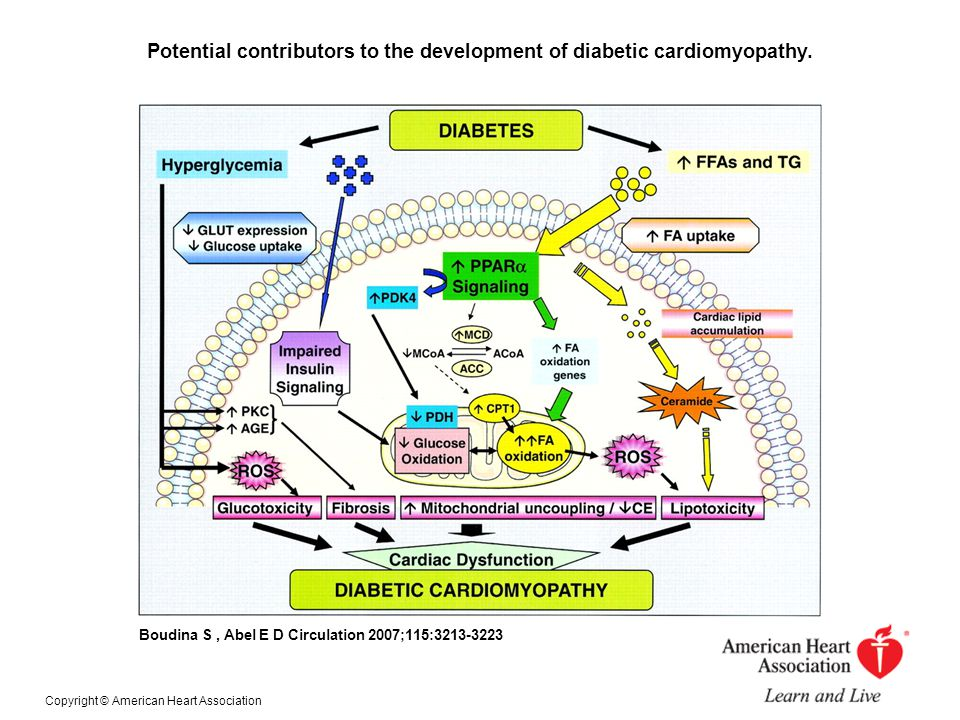 DM & Mechanisms of SCD  Atherosclerosis  Microvascular disease (retinopathy & microalbuminemea)  Diabetic autonomic neuropathy  ECG of DM patients presents repolarization abnormalities manifesting as prolonged QT interval and altered T waves (K channel abnormalities)