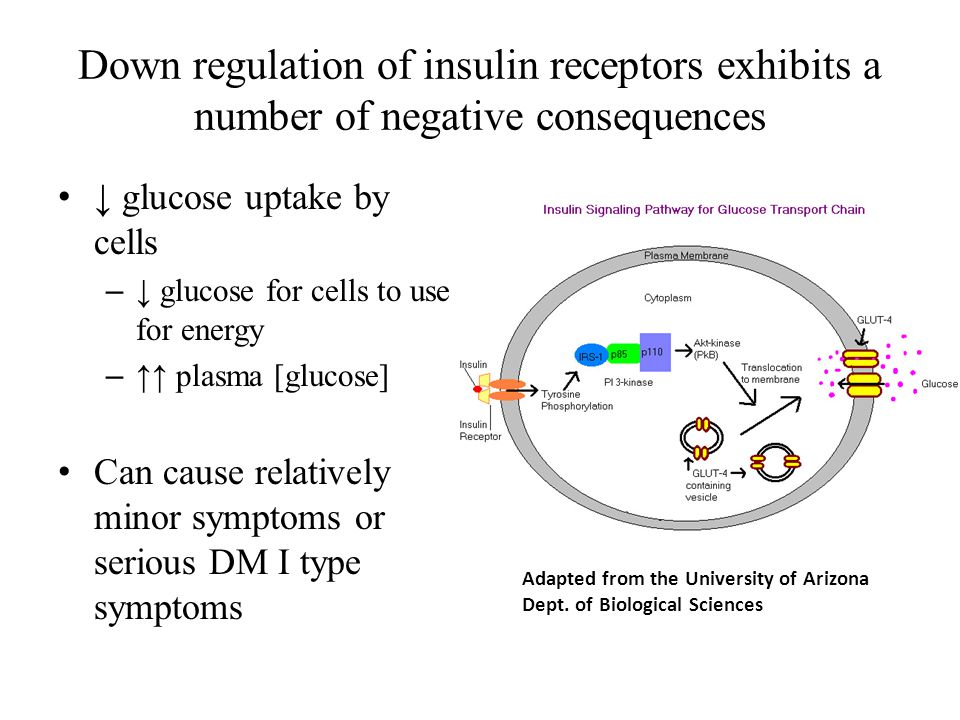 Down regulation of insulin receptors exhibits a number of negative consequences ↓ glucose uptake by cells – ↓ glucose for cells to use for energy – ↑↑