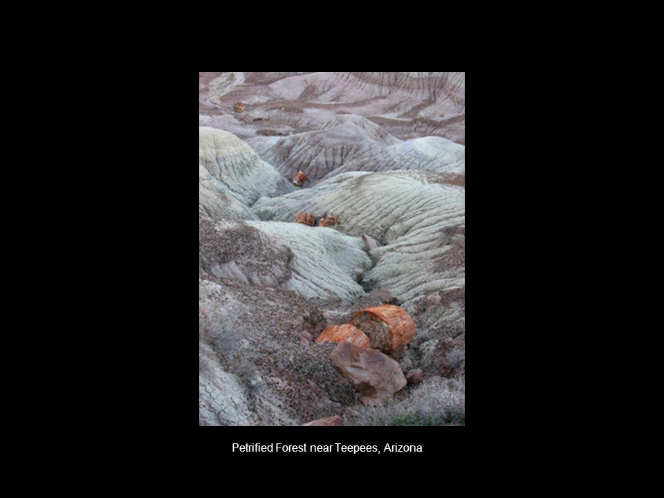 Petrified Forest near Teepees, Arizona