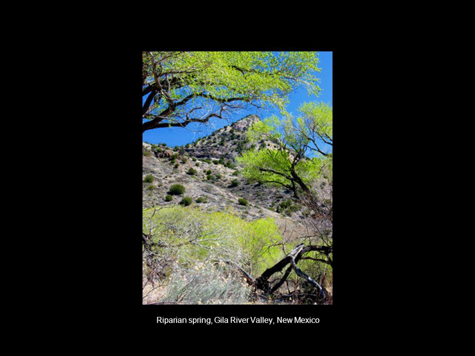 Riparian spring, Gila River Valley, New Mexico