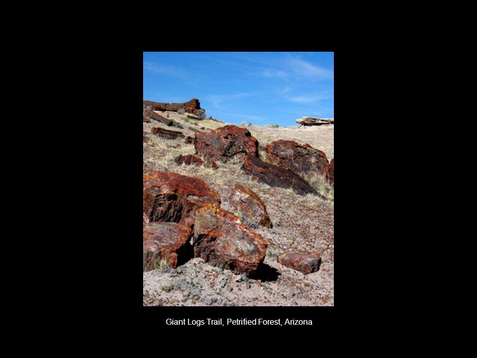 Giant Logs Trail, Petrified Forest, Arizona
