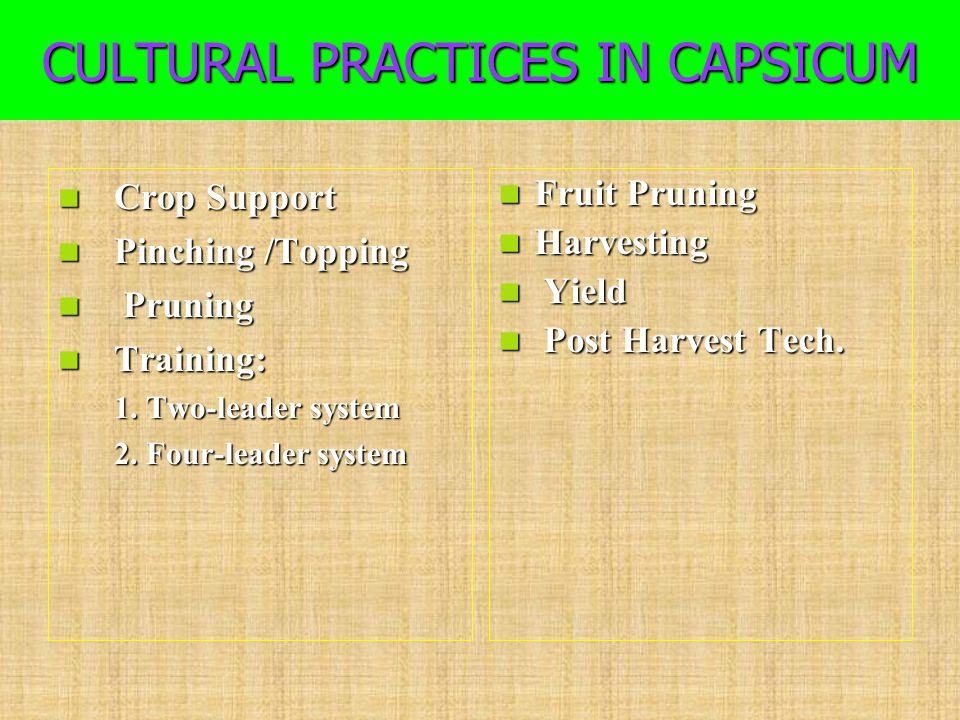 CULTURAL PRACTICES IN CAPSICUM Crop Support Crop Support Pinching /Topping Pinching /Topping Pruning Pruning Training: Training: 1. Two-leader system