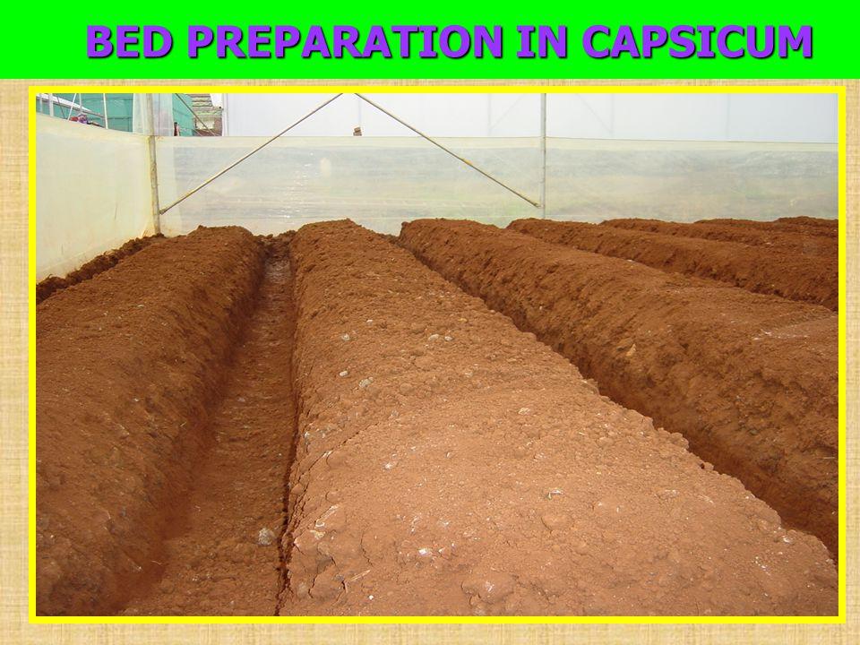 BED PREPARATION IN CAPSICUM BED PREPARATION IN CAPSICUM