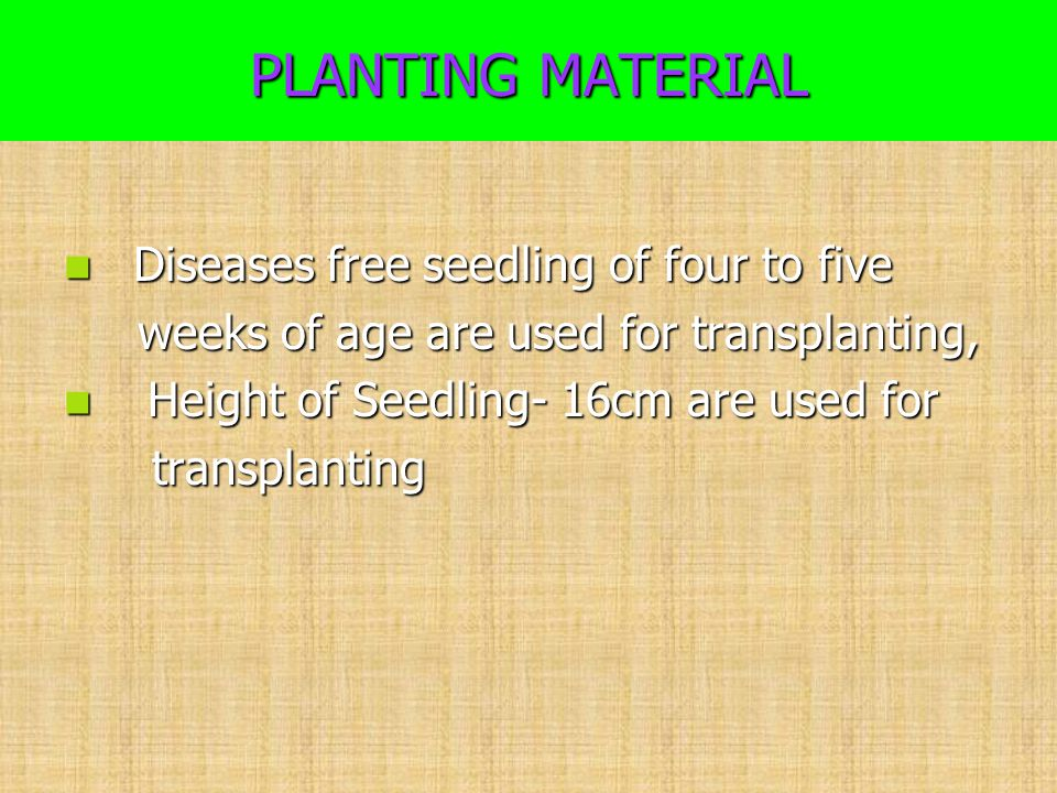 PLANTING MATERIAL Diseases free seedling of four to five Diseases free seedling of four to five weeks of age are used for transplanting, weeks of age