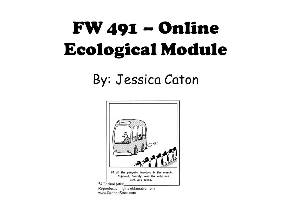 Introduction to Population Ecology What is a population.