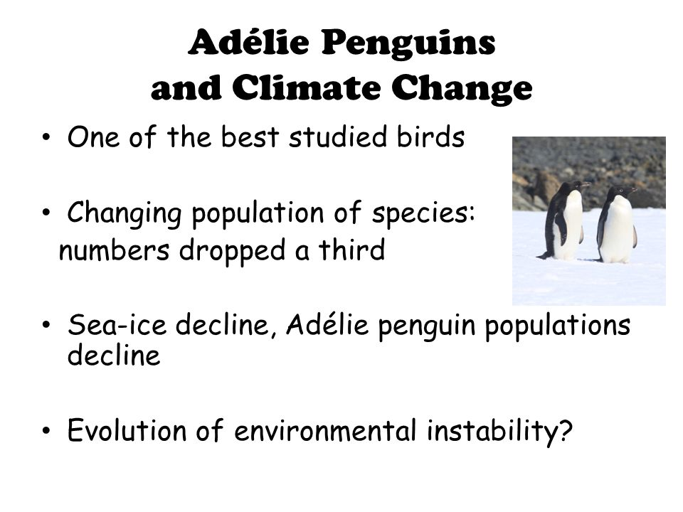 Adélie Penguins and Climate Change One of the best studied birds Changing population of species: numbers dropped a third Sea-ice decline, Adélie penguin populations decline Evolution of environmental instability?