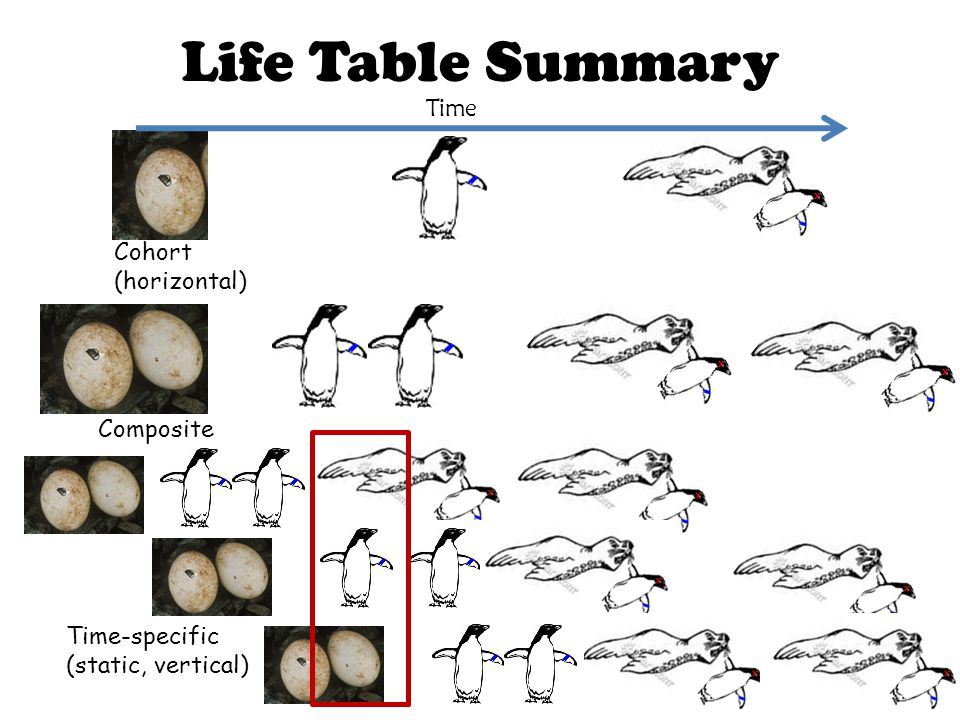 Life Table Summary Time Cohort (horizontal) Composite Time-specific (static, vertical)