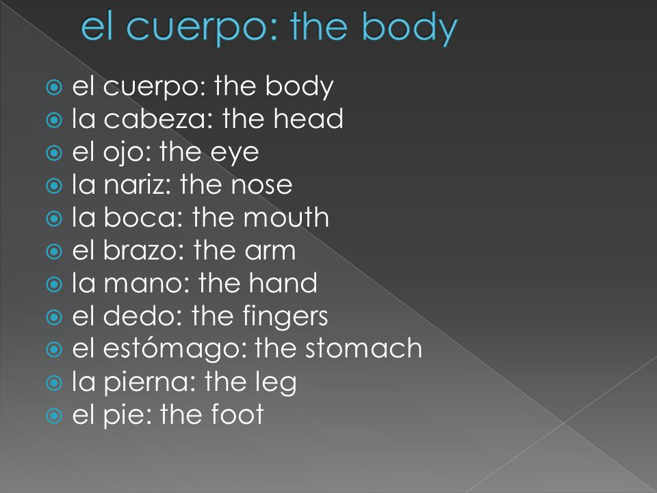  el cuerpo : the body  la cabeza: the head  el ojo: the eye  la nariz: the nose  la boca: the mouth  el brazo: the arm  la mano: the hand  el dedo: the fingers  el estómago: the stomach  la pierna: the leg  el pie: the foot