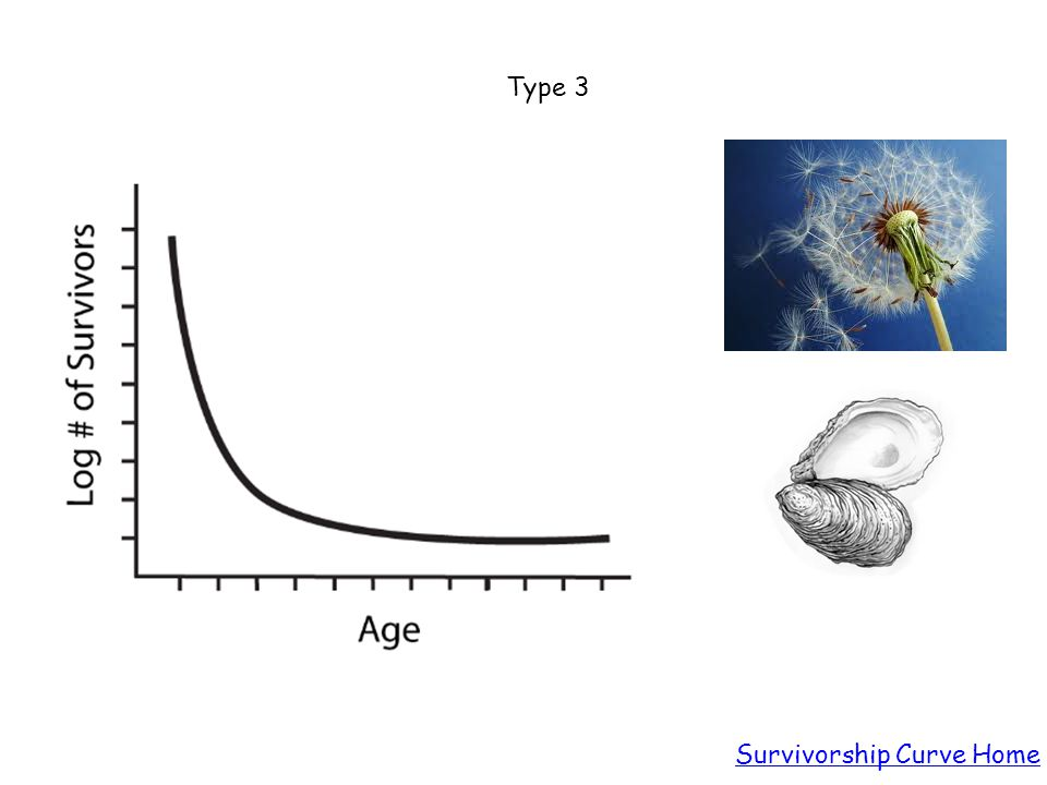 Type 3 Survivorship Curve Home