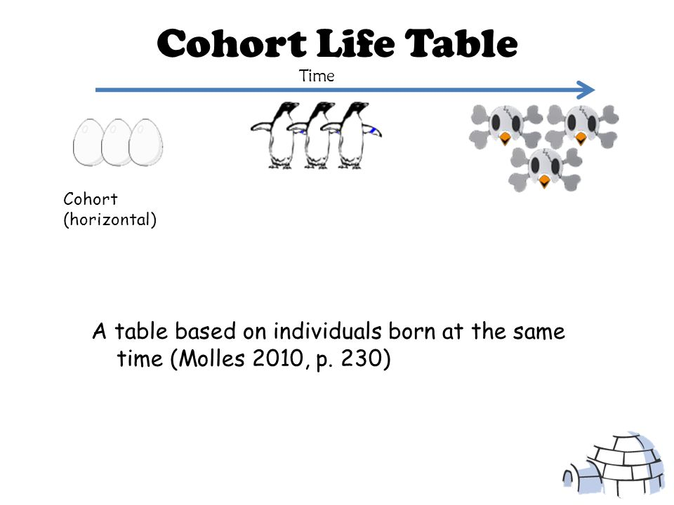 Static Life Table A life table constructed by recording the age at death of a large number of individuals A snapshot of survival within a population during a short interval of time (Molles 2010, p.